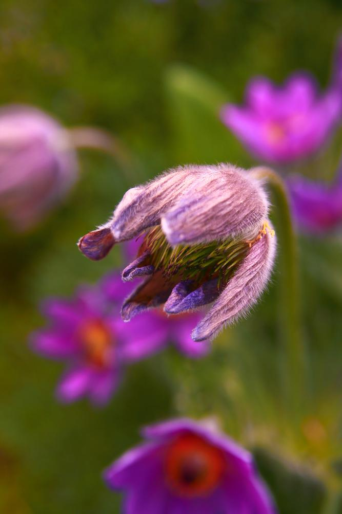 Photo in Macro #flower #spring #colour #macro #wood #freehand