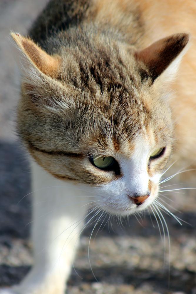 Photo in Random #chat #animal #minou