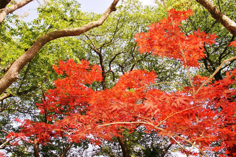 IMG_5956.JPG by Hisashi.Nagahiro