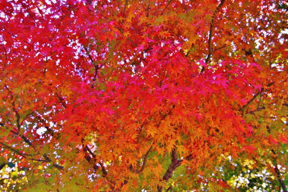 Autumn leaves2013 by Thomas Skywalker
