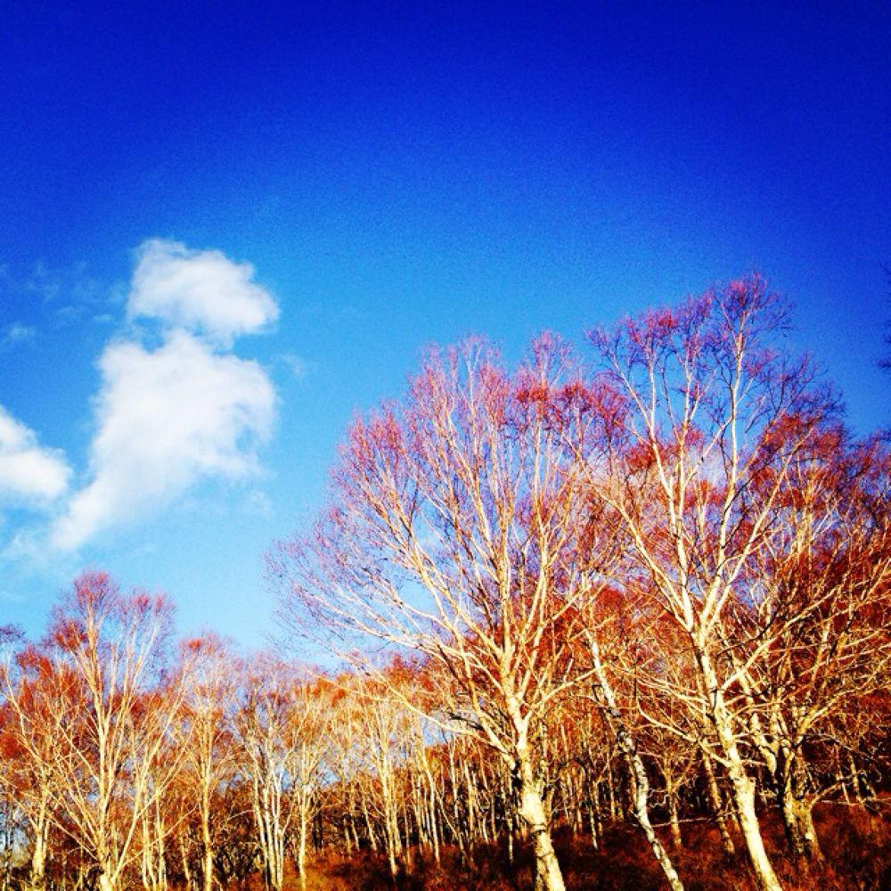 IMG_6199 by Hisashi.Nagahiro