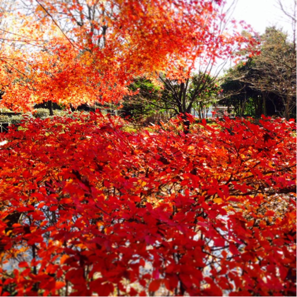 IMG_8208 by Hisashi.Nagahiro