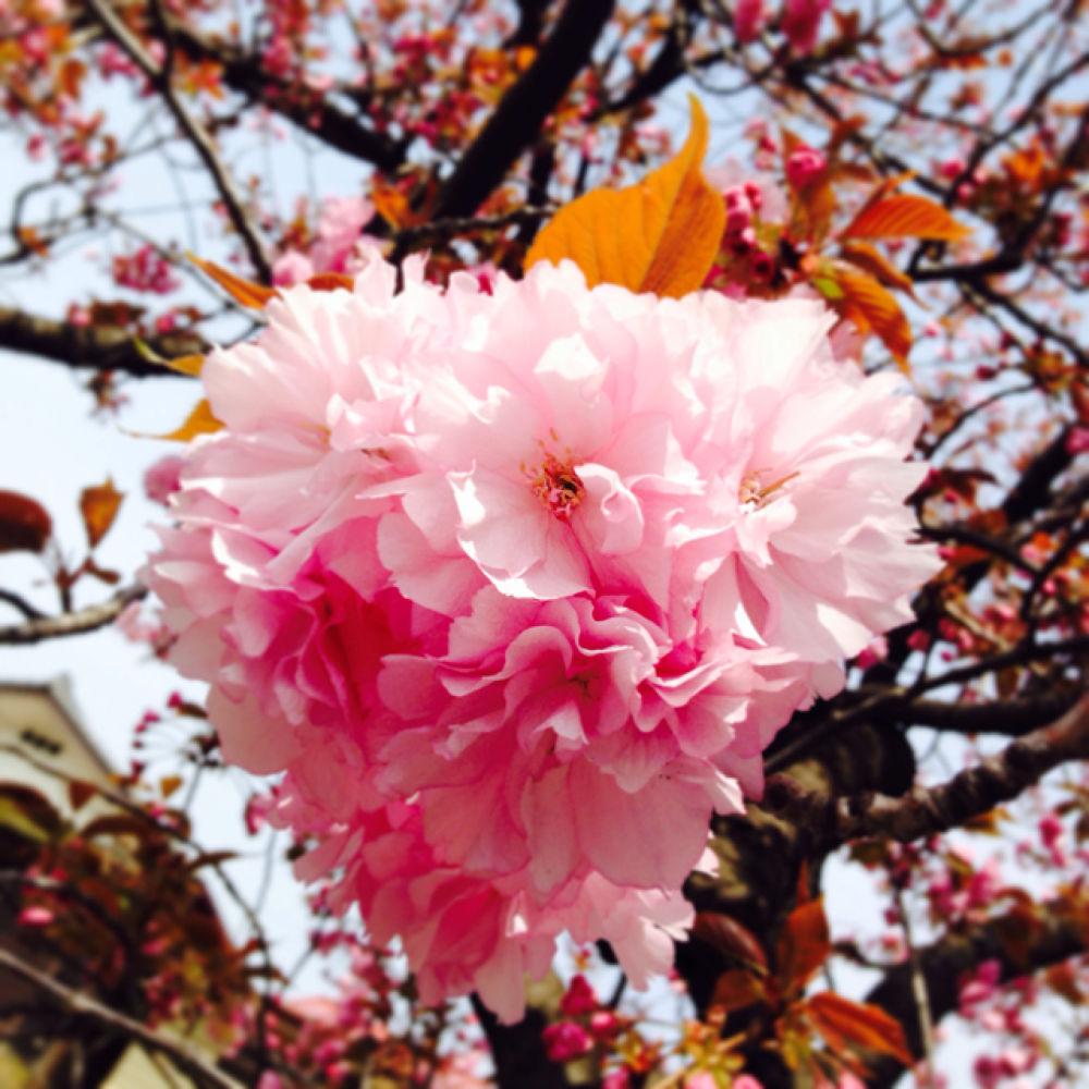 IMG_0200 by Hisashi.Nagahiro