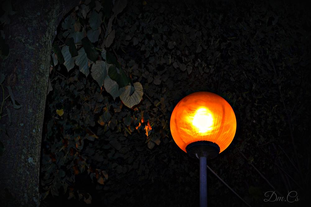 Photo in Cityscape #light #lamp #night #trees #liefs #leafs