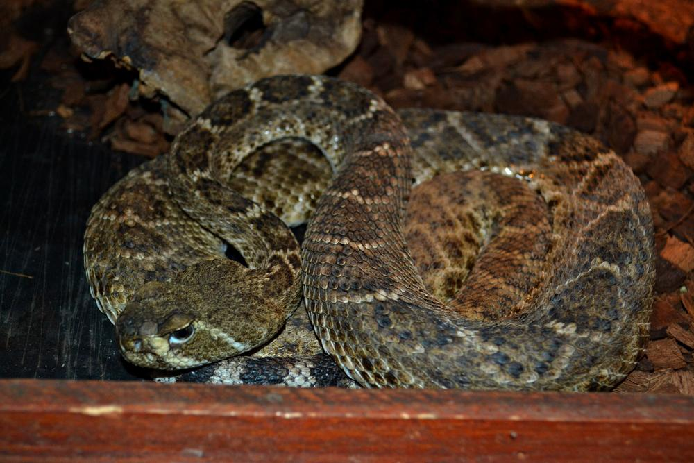 Photo in Animal #snake