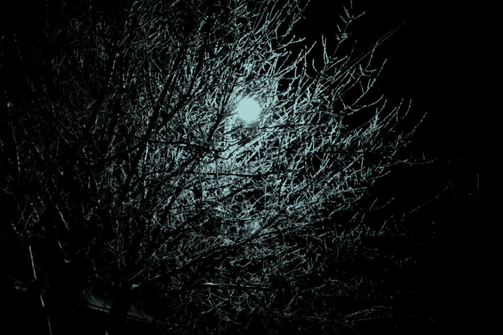 Photo in Abstract #moon #light #night #tree