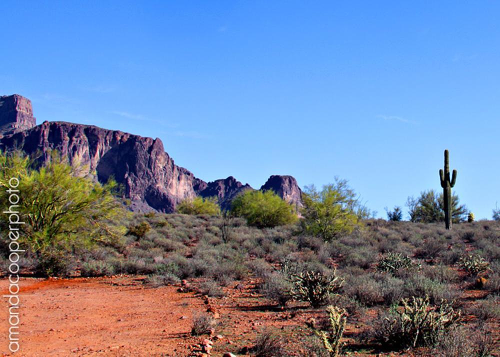 Photo in Landscape #desert #cactus #arizona #rocky #colorful