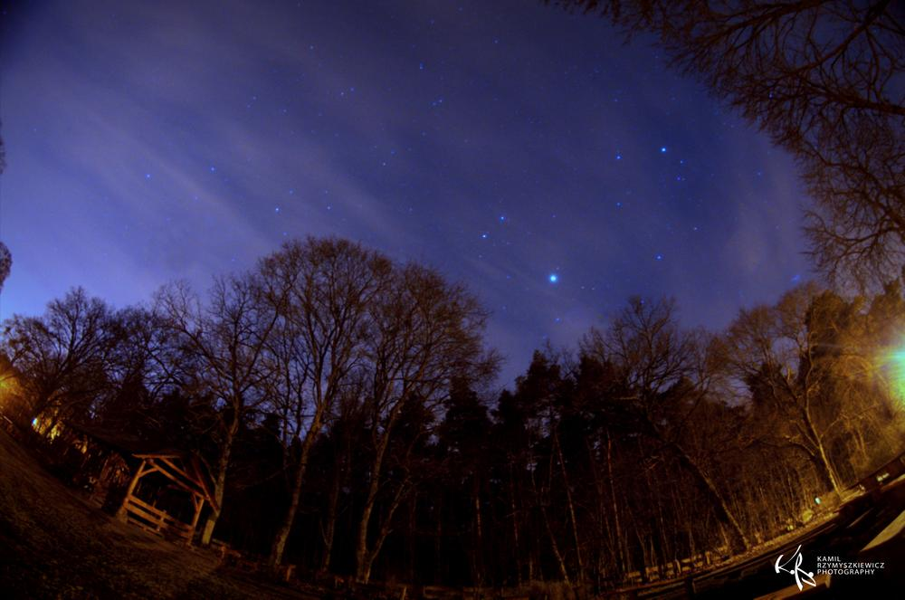 Photo in Nature #night #tree #forest #sky #stars