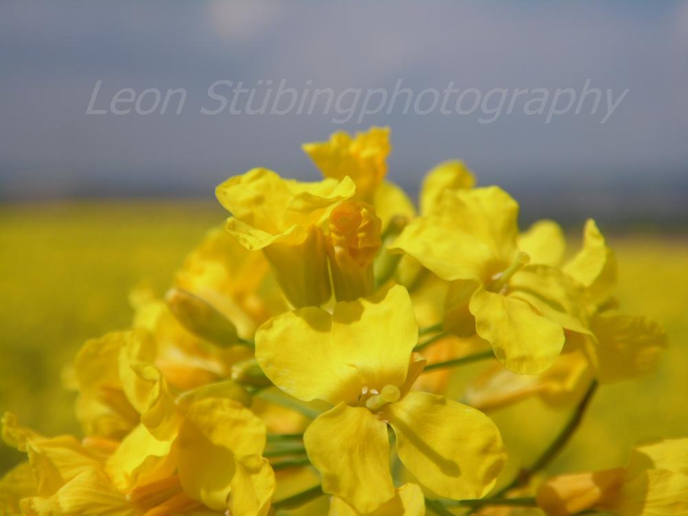 Ein gutes Foto ist ein Foto, auf das man länger als eine Sekunde schaut. by Leon Stübing