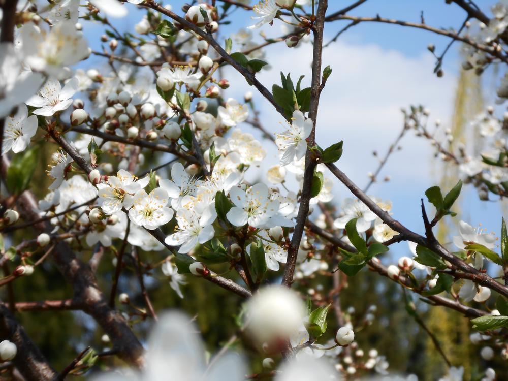 Spring II by Ieva