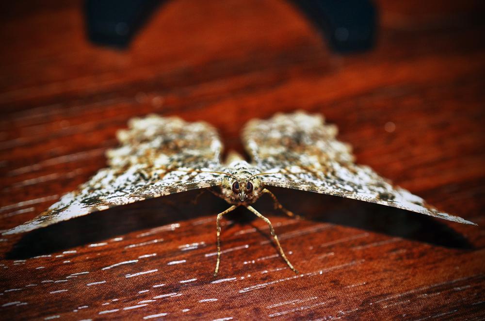 Spread wings by Márcio Fernandes