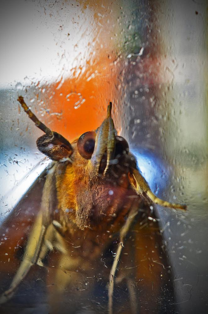 Let me in! It's rainning! by Márcio Fernandes