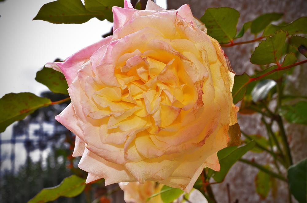 Flower by Márcio Fernandes
