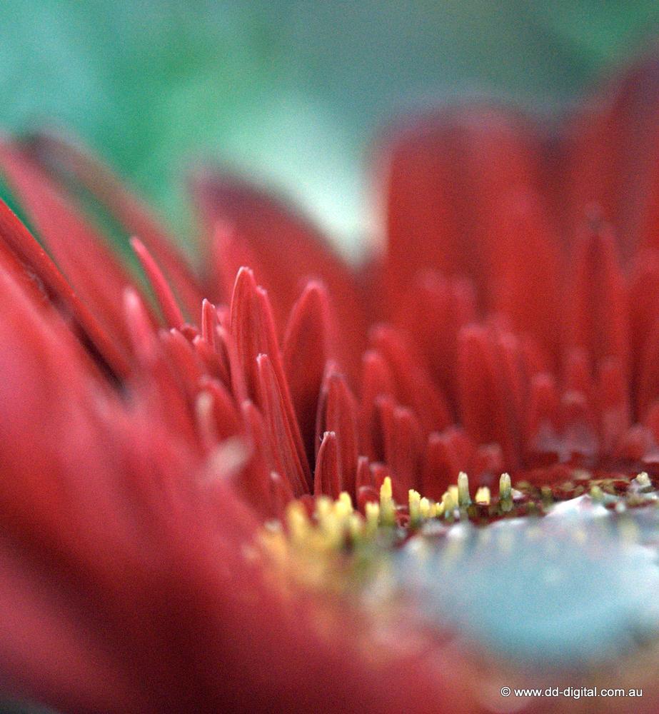 Photo in Macro #macro #floral