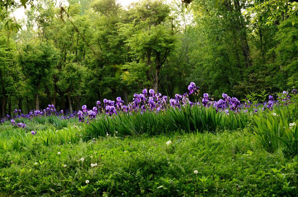 Iris Glory... by sriramshankars