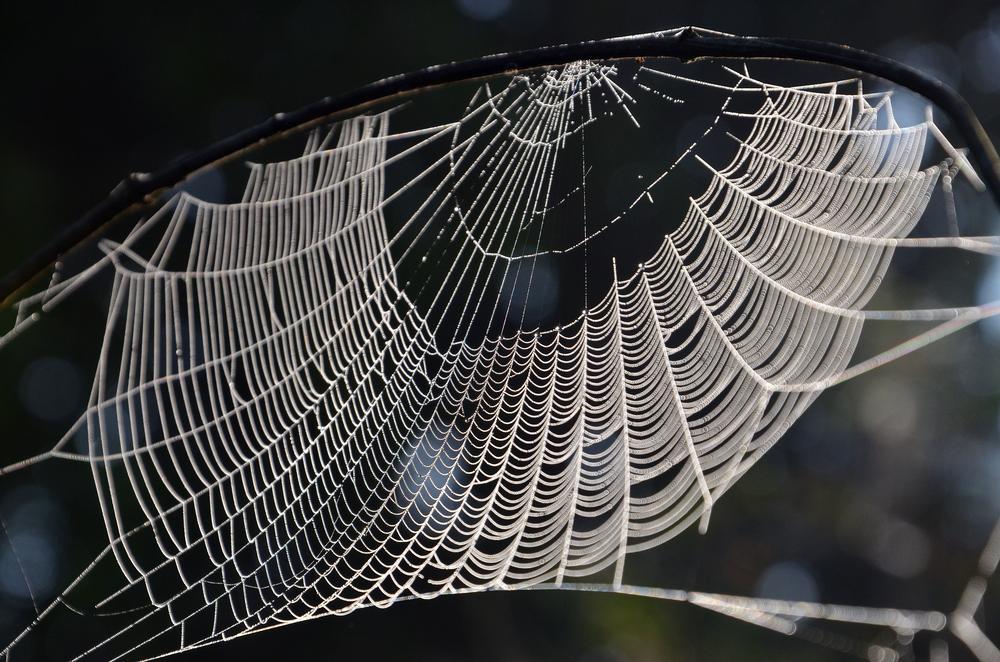 Net is ready, waiting for the prey... by sriramshankars
