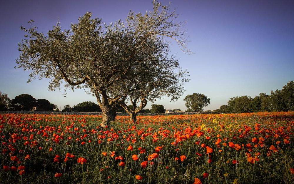 Rosso primavera by Stefania Tirella
