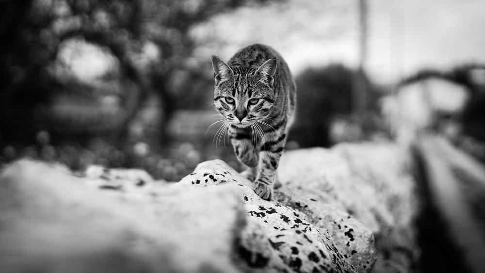 La tigre by Stefania Tirella