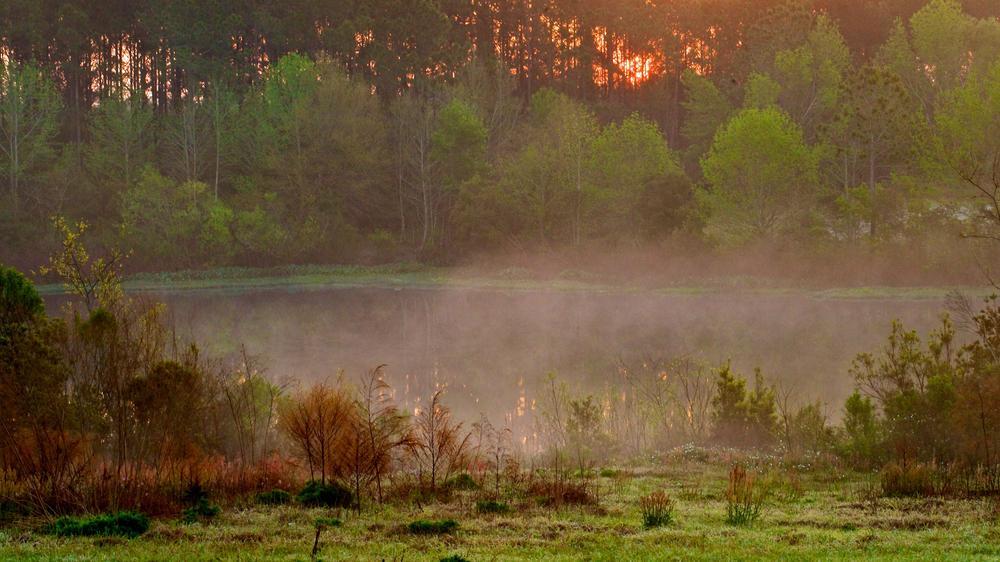 Ground Fog by Hugh Mitchell