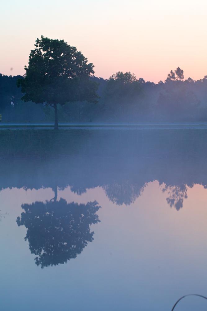 Photo in Landscape #reflection #morning #fog #florida #sunrise