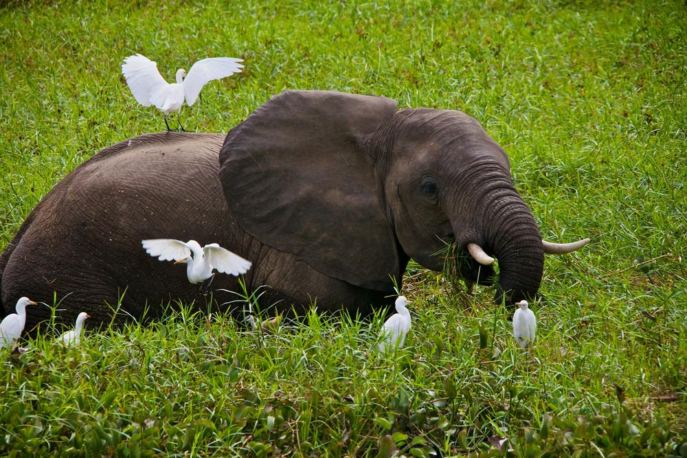 Photo in Animal #elephant #zimbabwe #africa #safari