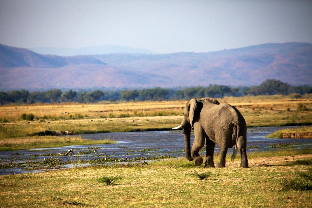 Elephant, (Mana Pools, Zimbabwe) by Hugh Mitchell