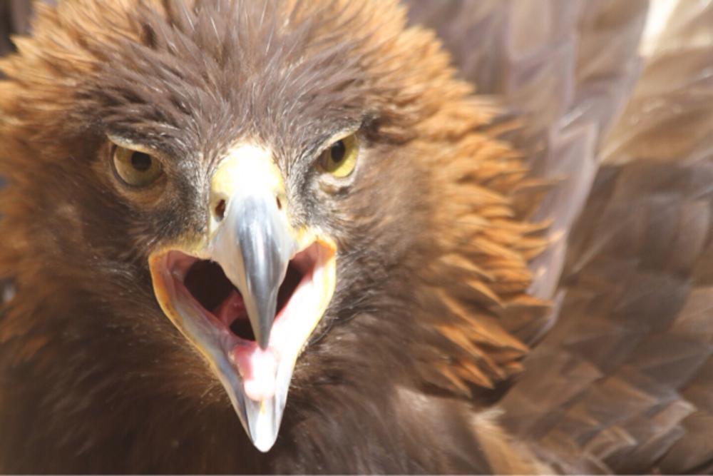Eagle by Jonathan Logan