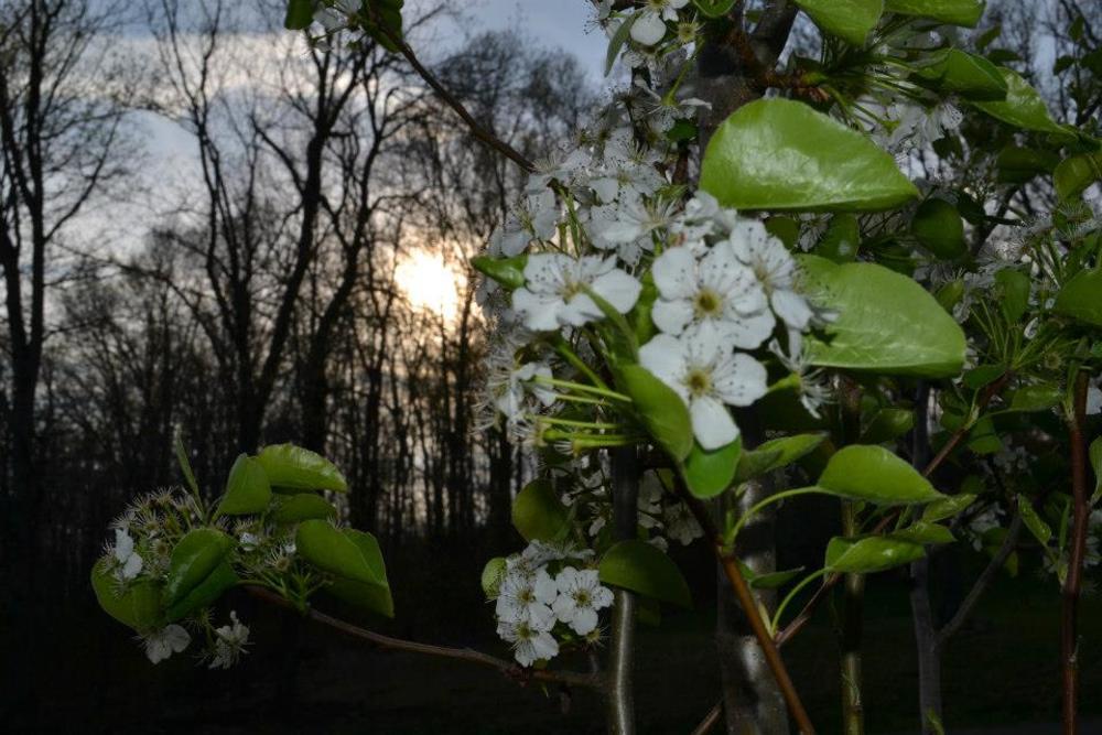 spring by Margaret Shoenberger Hoffman
