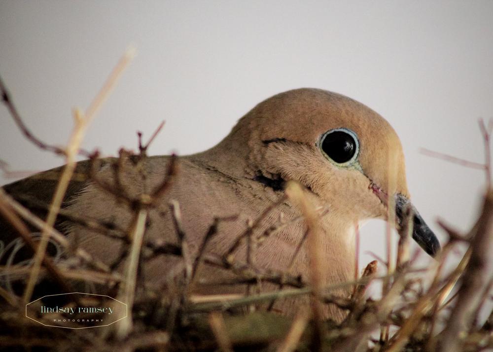 Photo in Animal #bird #wildlife #outdoors