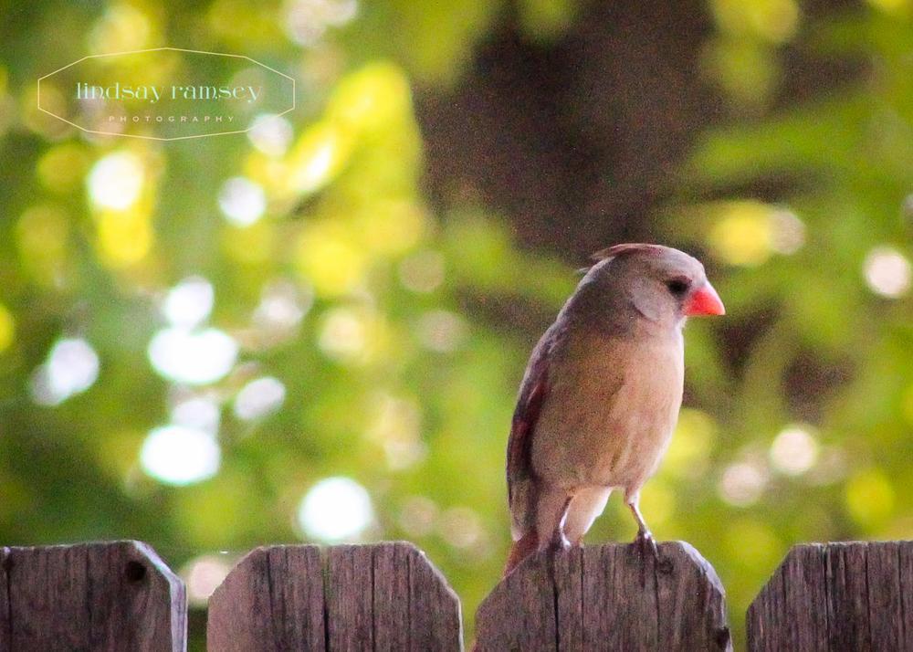 bird by Lindsay Ramsey