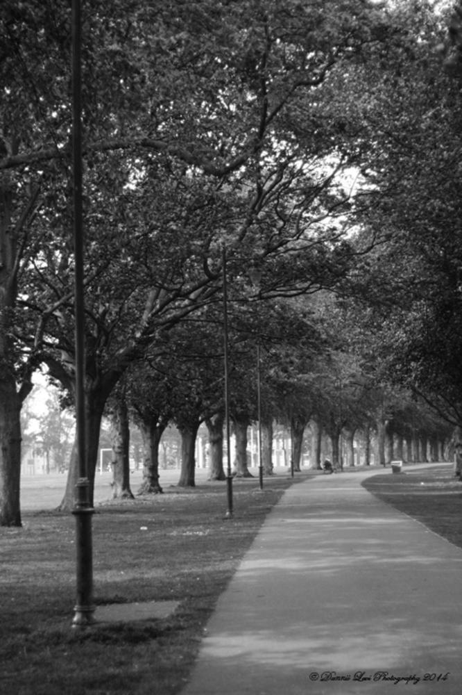 Photo in Black and White #b&w #park