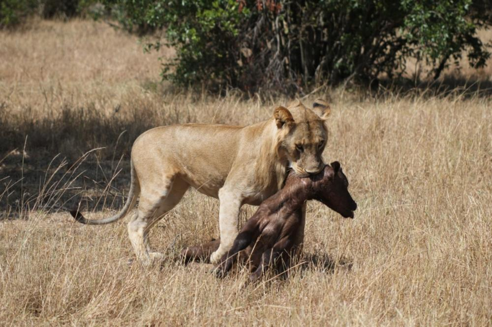 The Hunting Game.. #priceless# by EasyGoSafaris / Lets Go Kenya