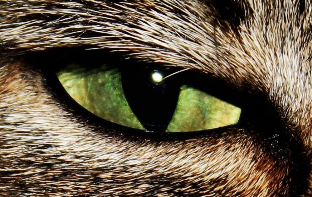 Cat Eye by Imogen Farmer