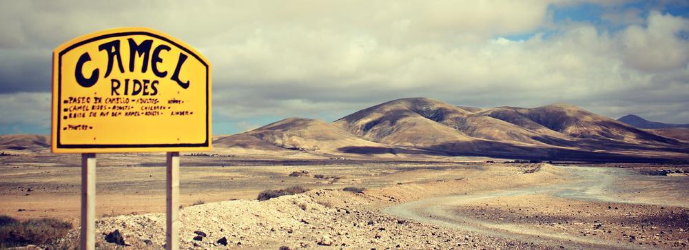 Photo in Landscape #fuerteventura #camel #rides #mountains #road