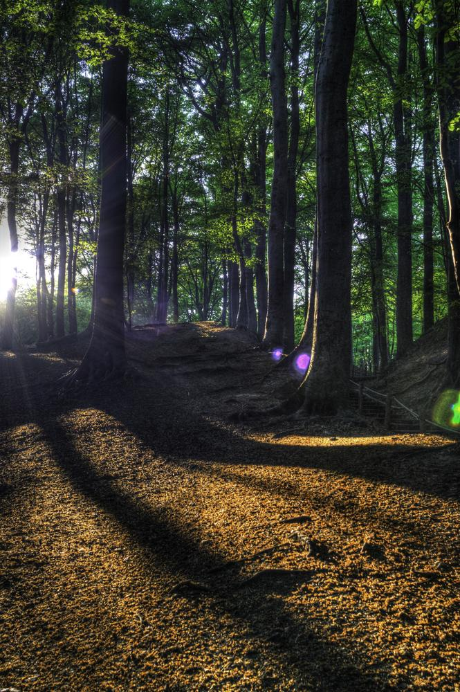 Shadows in the wood by Joël Arys