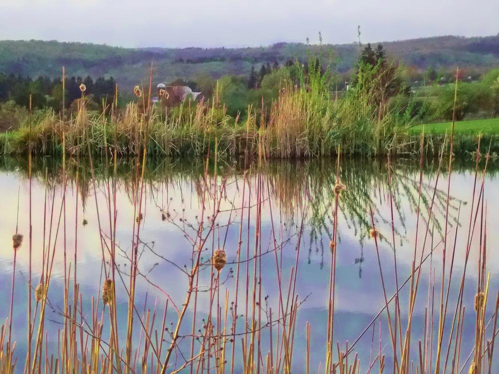 early evening view of our pond by Cynthia Potter Nichols