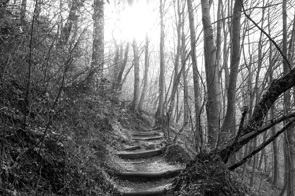The path by GL Photo