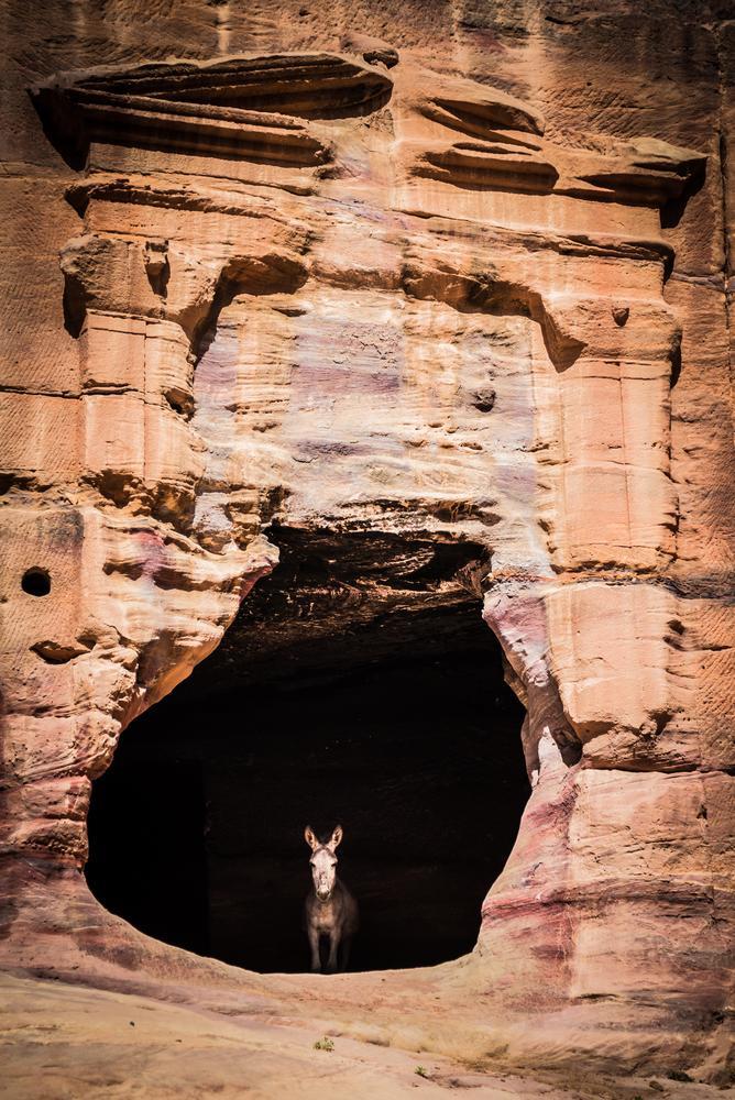Photo in Travel #donkey #desert #jordan #petra #colors