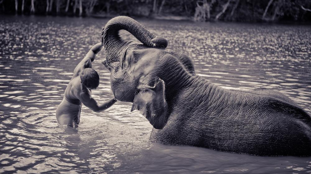 elephant bath by Simon Meteling