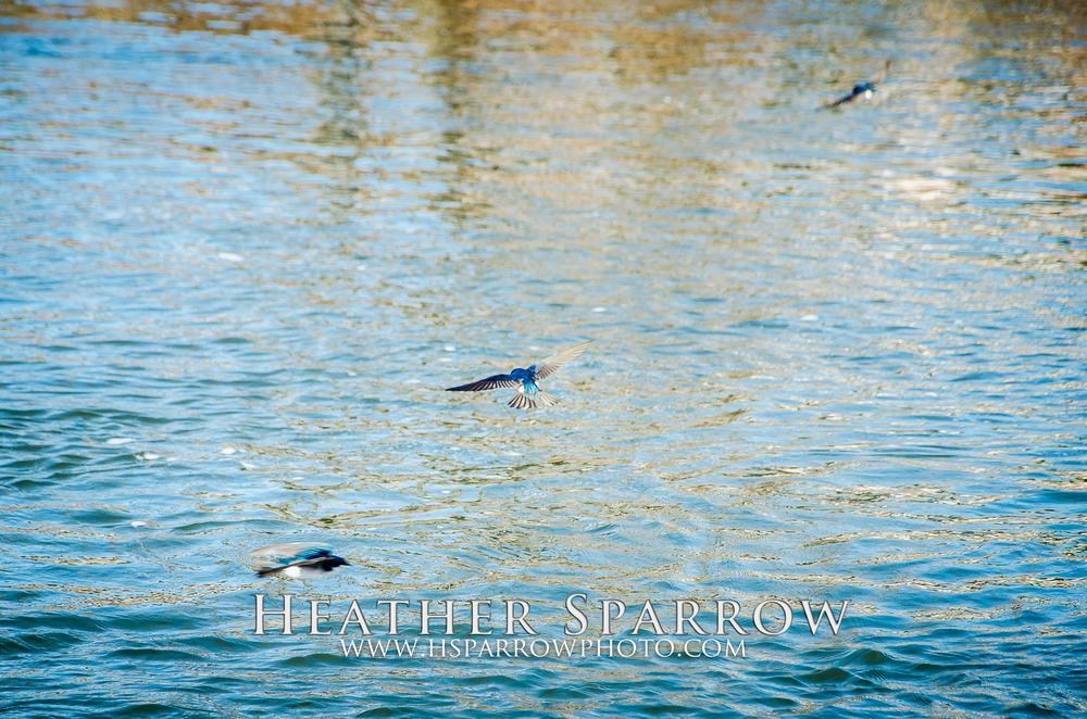 Photo in Animal #bird #free #flying #blue #water