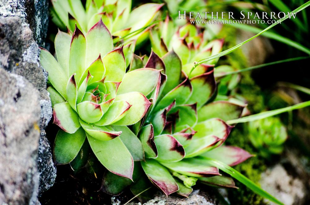 Photo in Nature #plant #rock #green