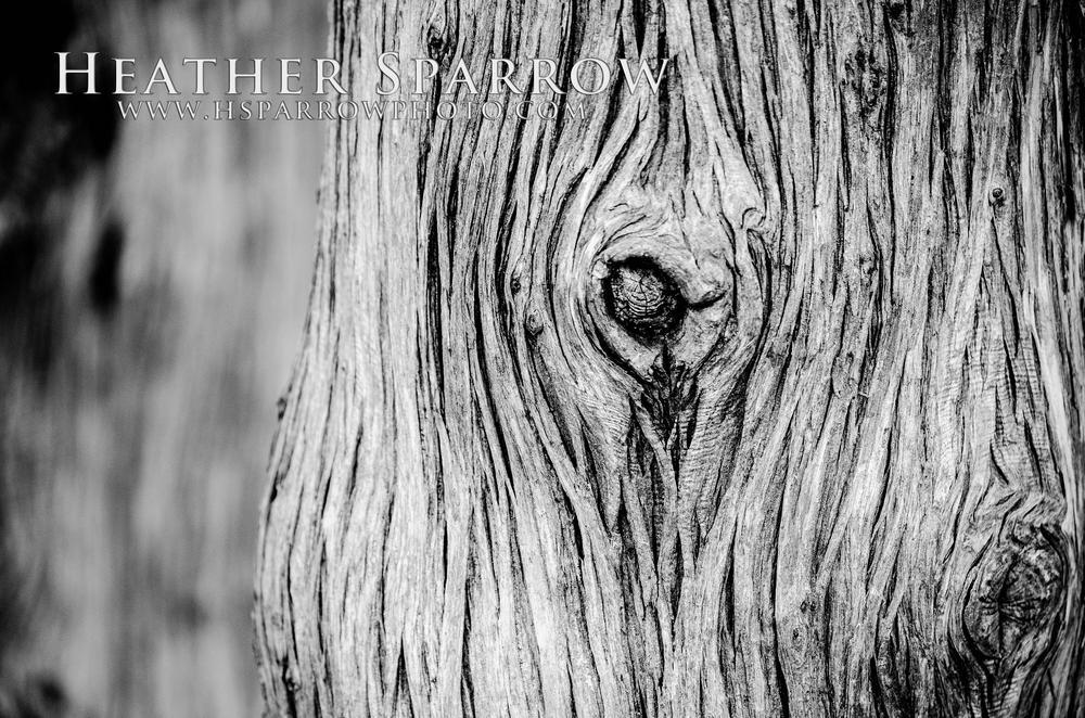Bark by Heather Sparrow
