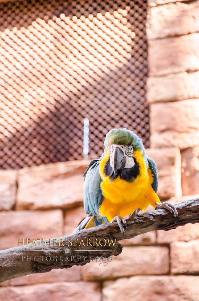 Photo in Animal #bird #branch #yellow