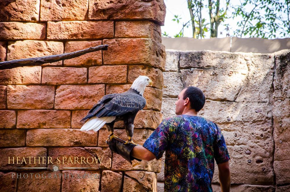 Bald Eagle by Heather Sparrow