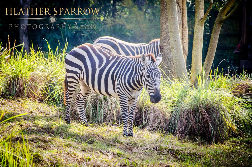 Stripes by Heather Sparrow