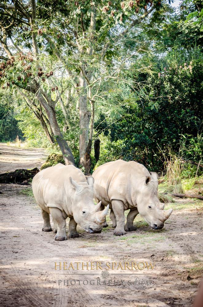 Rhino Love by Heather Sparrow
