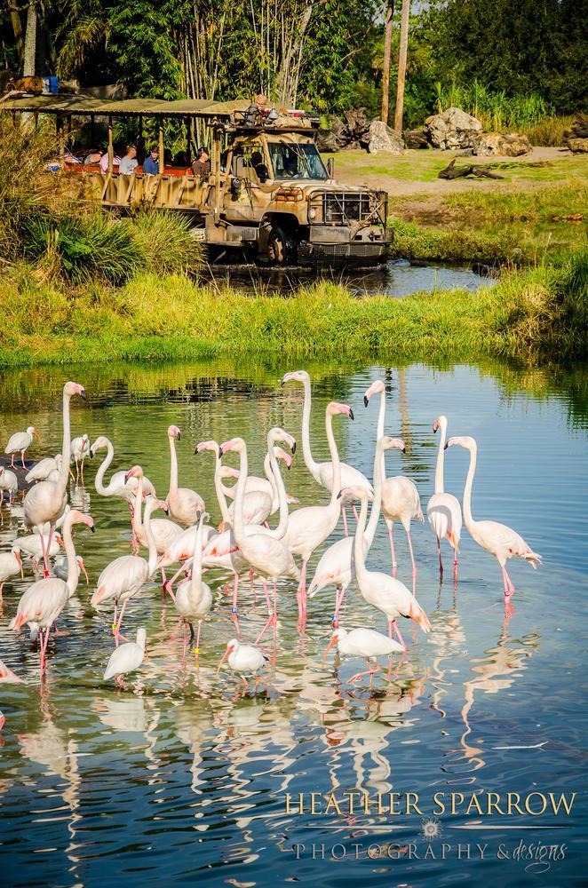 Photo in Animal #flamigos #pink #water #wdw #walt disney world