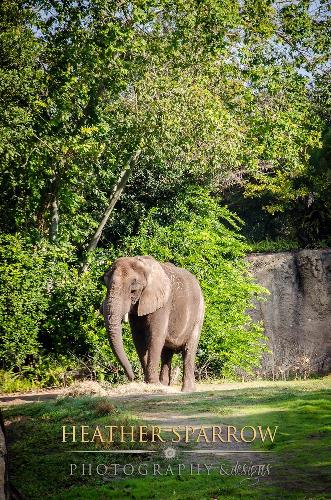 Photo in Animal #elephant #trees #green #gray #wdw #walt disney world