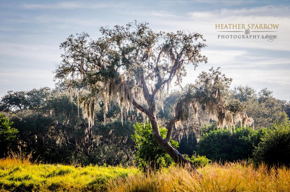 Photo in Landscape #tree #peace #calm #gold #clouds #bright #wdw #walt disney world