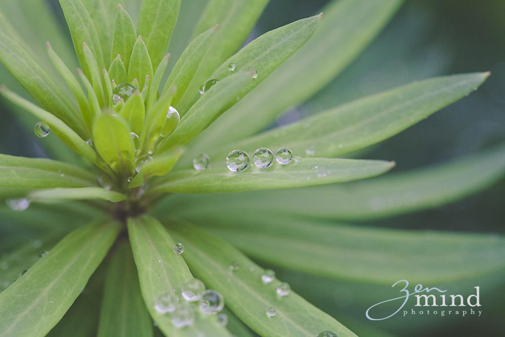 After the rain by Valeria Sereia